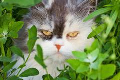 terrible fluffy house cat muzzle - stock photo
