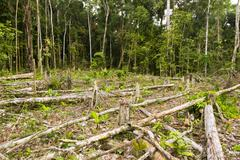 Tropical rainforest cut for agriculture in the ecuadorian amazon Stock Photos