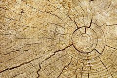 Photographic background - cut of wood log Stock Photos