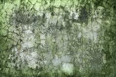 Concrete wall green with time and moisture Stock Photos