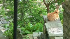 Cat Sat on Steps Wall Stock Footage