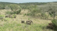 Wide shot of elephants in Hluhlue Umfolozi game reserve Stock Footage