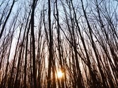 sunset in forest - stock photo
