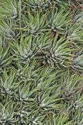 Abstract succulent plants Stock Photos
