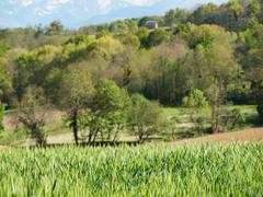 green wheat field landscape - stock photo
