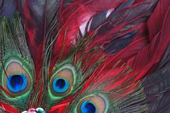 feathers - stock photo