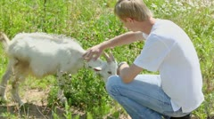 Boy pats goatling on grass field at summer day - stock footage