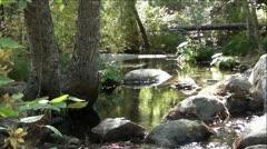 Rock Creek in Beautiful Green Forest Stock Footage