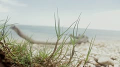 Green background Stock Footage