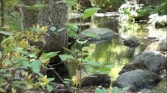 Beautiful Rock Creek in Sierra Nevada Mountains Stock Footage