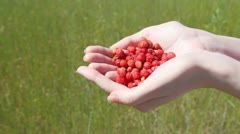 Handful of red wild strawberry in female palms Stock Footage