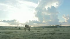 Solitary horse Stock Footage