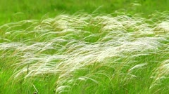 Stipa Stock Footage