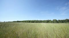 High grass in field before wood and dark blue sky Stock Footage