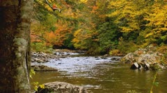 Stock Video Footage of autumn stream Tennessee