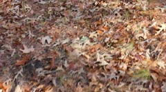 Crunching Through Fall Leaves Stock Footage