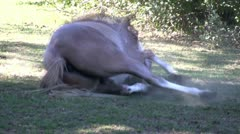 Dusty horse; HD 1080 24p Stock Footage