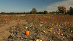 Field of pumpkins Stock Footage