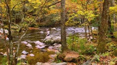 Man fly fishing beautiful autumn stream Stock Footage