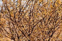 bushveld thorn tree mesh - stock photo