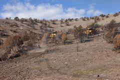 Mountain dead burned cedar trees removed chain - stock photo
