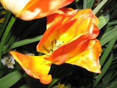 Fiery Flower Stock Photos