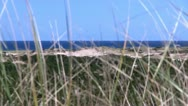 Stock Video Footage of Bike path Provincetown Cape Cod; 8