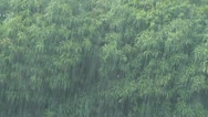 Stock Video Footage of monsoon tropical jungle heavy rain