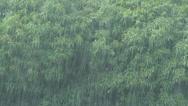 Stock Video Footage of monsoon tropical jungle heavy rain