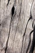 tree trunk background - stock photo