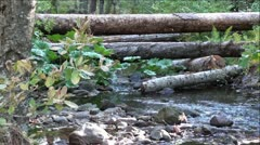 Fallen Tree's over Rock Creek in Sierra Nevada Mountains, California Stock Footage