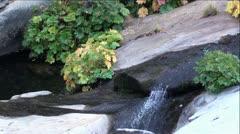 Fall Plants and Mini Waterfall in Beautiful Rock Creek Stock Footage