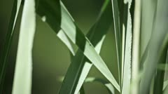 Grass, close up. Detail Stock Footage