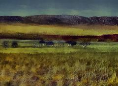 3d grassland and trees Stock Illustration