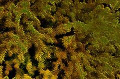 3d image of yellow spiky autumn brushes - stock illustration