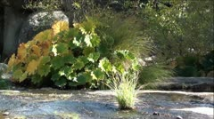 Autumn Colors at Rock Creek in High Sierra Nevada Mountains, California Stock Footage