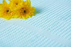 contrasting composition - yellow flowers on blue background - stock photo