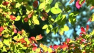 Stock Video Footage of fall tree branches