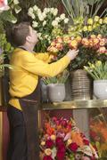 Florist arranging fresh flowers - stock photo