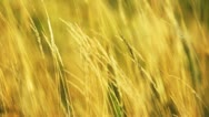 Dry grass Stock Footage