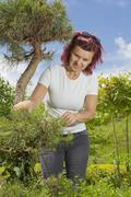 Mid age women -trimming natural pine bonsai tree - stock photo