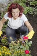 Mid age women gardener arranging roses - stock photo