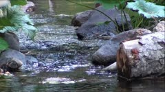 Tree Log and Rocks in Mountain Creek Stock Footage