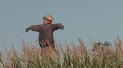 720p Scarecrow Stock Footage