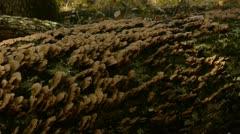 Fungus on dead tree Stock Footage