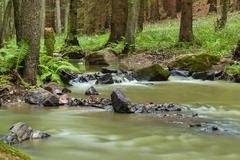 Mountain stream in a forest Stock Photos