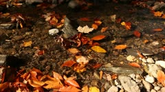 Autmn leaves in tiny brook Stock Footage