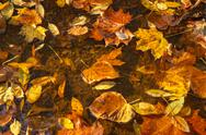 Coloful fallen leaves on water Stock Photos