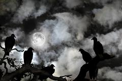 Vultures silhouetted against a full moon and spooky sky Stock Illustration