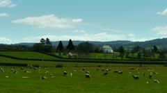 Wool farm in tasmania Stock Footage
